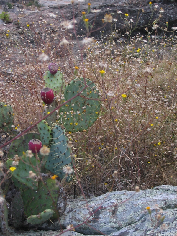 Cactus & Fall Flowers